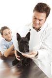 Perro que trata veterinario Imagen de archivo