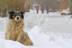 Perro que vaga que congela en la nieve en una tormenta Imagenes de archivo