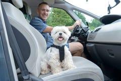 Perro que viaja en un coche Imágenes de archivo libres de regalías