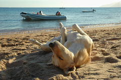 Perro Relaxed Fotografía de archivo libre de regalías