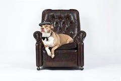 Perro Relaxed en una silla Fotos de archivo