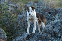 Perro rojo blanco en las piedras imagen de archivo
