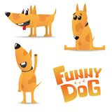 Perro rojo divertido en puntos con un cuello Imagenes de archivo