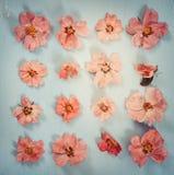 Perro-rosa rosada de las flores en fondo azul Endecha plana Imágenes de archivo libres de regalías