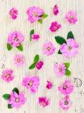 Perro-rosa rosada de las flores en fondo de madera ligero Imagen de archivo
