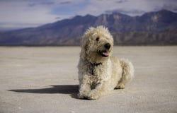 Perro salado foto de archivo libre de regalías