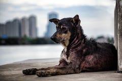 Perro sarnoso perdido solo en el embarcadero cerca del río con la ciudad borrosa Fotos de archivo libres de regalías