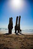 Perro silhoutted en la playa soleada Fotografía de archivo