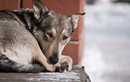 Perro sin hogar Imagen de archivo