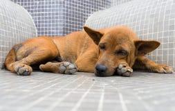Perro sin hogar fotos de archivo