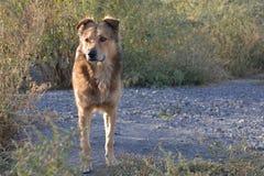 Perro sin hogar Imagenes de archivo