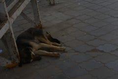 Perro sin hogar Foto de archivo libre de regalías