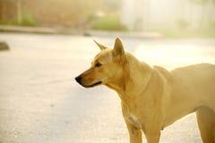 Perro sin hogar 2 Imagen de archivo libre de regalías