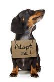 Perro sin hogar a adoptar Fotografía de archivo