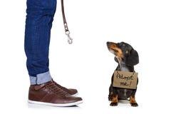 Perro sin hogar a adoptar Foto de archivo libre de regalías