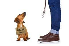 Perro sin hogar a adoptar Imagen de archivo