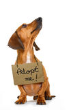 Perro sin hogar a adoptar Fotos de archivo libres de regalías