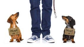 Perro sin hogar a adoptar Imagen de archivo libre de regalías