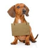 Perro sin hogar a adoptar Fotografía de archivo libre de regalías