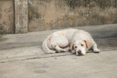 Perro sin hogar cansado Imagenes de archivo