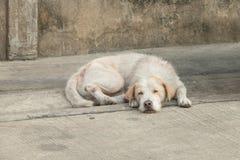 Perro sin hogar cansado Fotografía de archivo