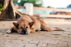 Perro sin hogar de la calle sola el dormir en el sendero Fotos de archivo