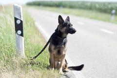 Perro sin hogar dejar solo en refugio para animales que espera del streetside para Foto de archivo
