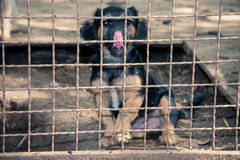 Perro sin hogar detrás de la cerca Imágenes de archivo libres de regalías