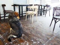 Perro sin hogar en ampliamente un café del invierno fotos de archivo libres de regalías