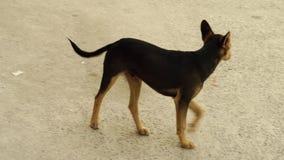 Perro sin hogar en la calle metrajes