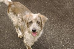 Perro sin hogar feliz Fotos de archivo
