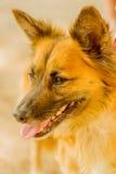 Perro sin hogar infeliz Fotografía de archivo libre de regalías