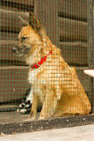 Perro sin hogar infeliz en refugio del perro Fotos de archivo libres de regalías