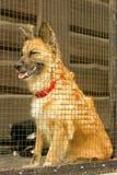 Perro sin hogar infeliz rejilla Imagen de archivo libre de regalías