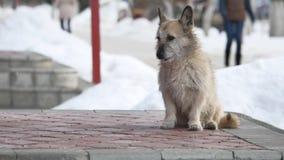 Perro sin hogar perdido que se sienta delante de la comida que espera de la entrada del colmado para el problema de animales domé almacen de metraje de vídeo