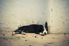 Perro sin hogar que duerme cerca por la pared. Fotos de archivo libres de regalías