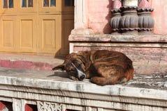Perro sin hogar que duerme en la puerta de un monasterio budista Imagen de archivo libre de regalías