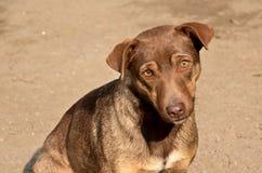 Perro sin hogar triste Imagen de archivo libre de regalías