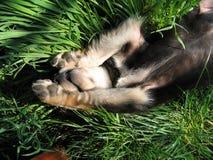 Perro soñoliento Fotos de archivo