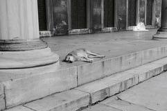 Perro soñoliento foto de archivo