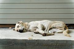 Perro soñoliento de la calle foto de archivo libre de regalías