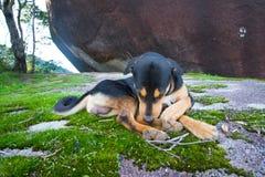 Perro soñoliento en Khao Soi Dao, Chanthaburi, Tailandia Imagen de archivo