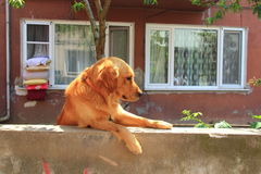 Perro sobre la cerca Imagenes de archivo