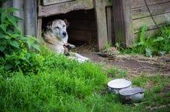 Perro solamente al aire libre con una cadena fotografía de archivo libre de regalías