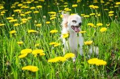 Perro soleado brillante en flores Imagen de archivo