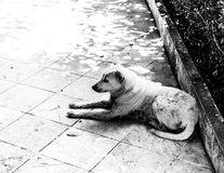 Perro solo Imagen de archivo libre de regalías