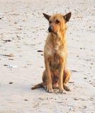 Perro solo Foto de archivo libre de regalías