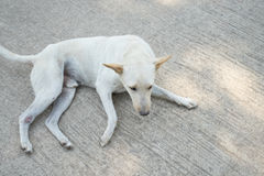 Perro solo Imagen de archivo