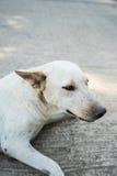 Perro solo Imágenes de archivo libres de regalías