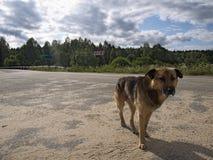 Perro solo abandonado Fotografía de archivo libre de regalías